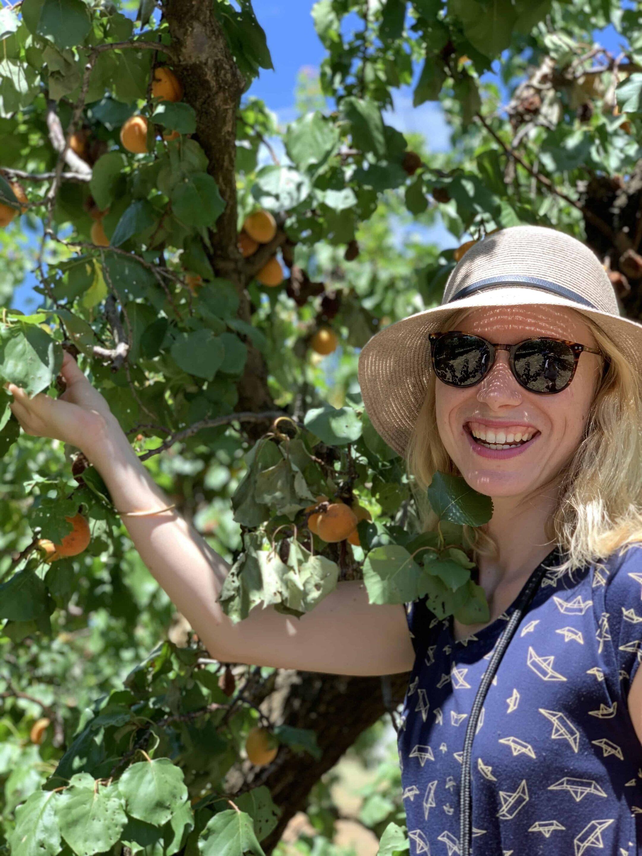 lady picking apricots