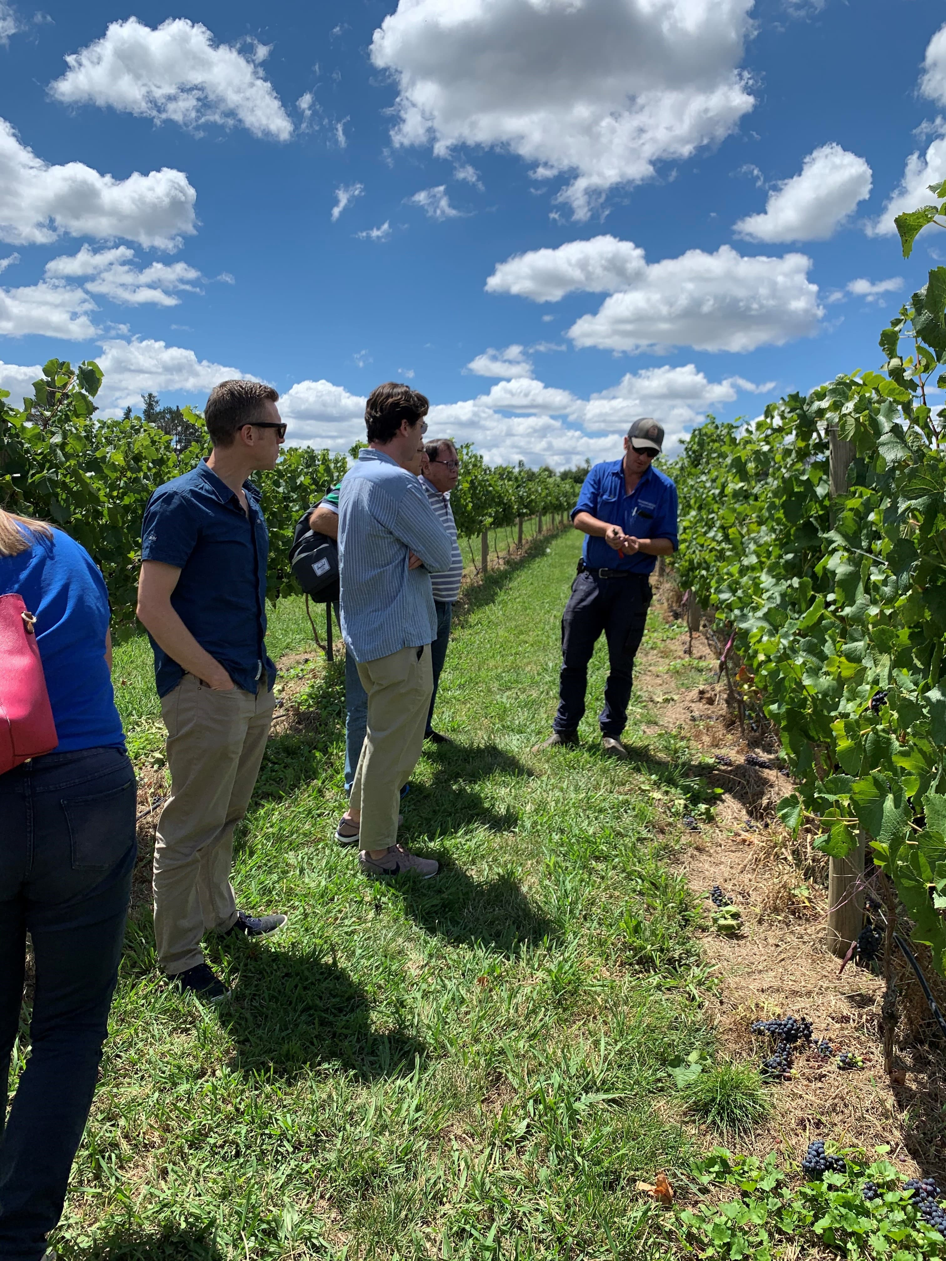 4 men listening to winemaker share story of wine making in vineyard